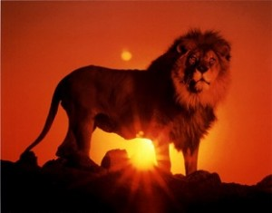 lion-over-the-sunset